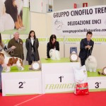 Gruppo-7